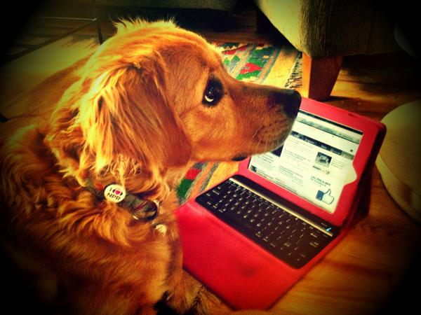 """""""Here is Wyatt. He loves listening to KCFR-AM Denver on my tablet!"""""""