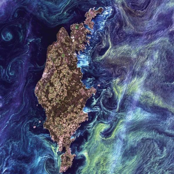<strong>Phytoplankton Bloom, Baltic Sea, 2005 </strong>Massive congregations of greenish phytoplankton swirl in the dark water around Gotland, a Swedish island in the Baltic Sea. Phytoplankton are microscopic marine plants that form the first link in nearly all ocean food chains. Blooms of phytoplankton, occur when deep currents bring nutrients up to sunlit surface waters.