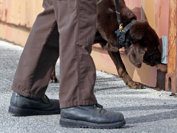 A Miami-Dade narcotics detector canine gives a demonstration in 2011. The Supreme Court ruled Tuesday that courts should generally consider a drug dog's sniff as reliable if the dog has passed a certified training program that includes controlled performance tests.
