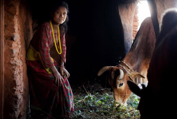 Lalita, 14, poses for a photo inside the household <em>chaupadi</em> shelter, a squat crawlspace under the home shared with the family's animals. Lalita sleeps in the dark space behind where the cows are fed, lighting a fire to protect herself from the elements.