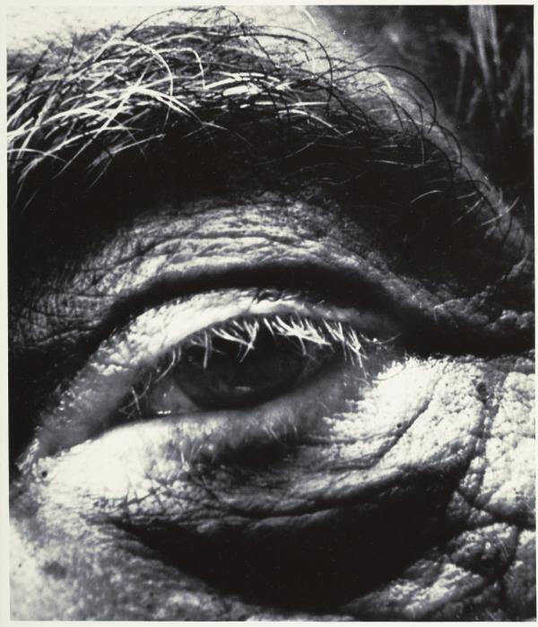Alberto Giacometti, 1963