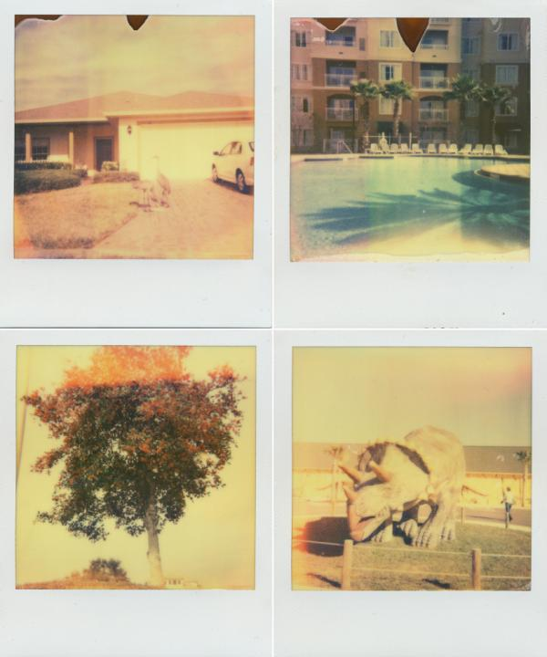 "Clockwise from top left: birds snack on seeds in Solivita, the pool at The Point Orlano Resort, a flowering tree in DeLand, and the entrance to Dinosaur World. Shot with <a href=""http://the-impossible-project.com/"">Impossible Project</a> film."