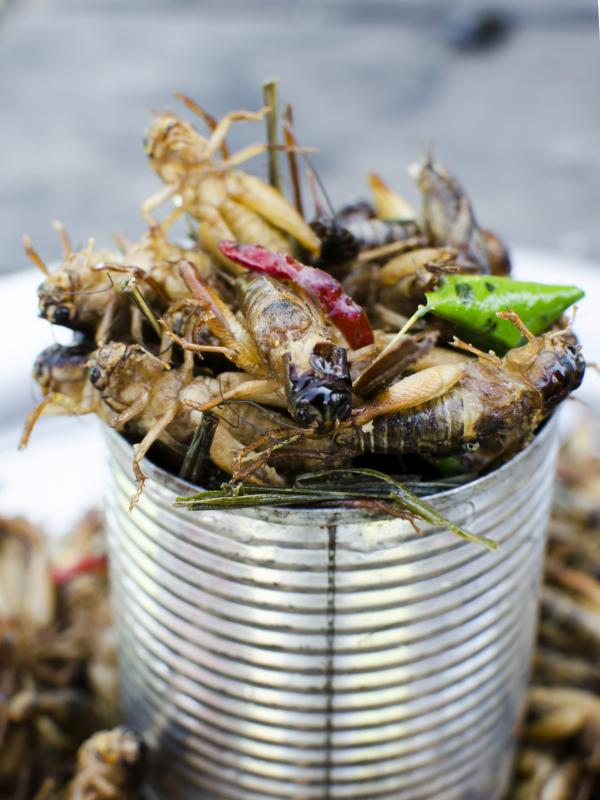 Locusts are cheap and easy to farm, and are considered a delicacy in many countries in Africa.