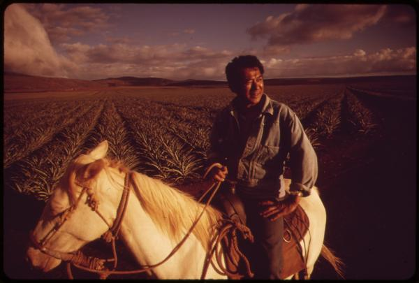 Henri Aki takes his horse for a late afternoon ride through pineapple fields, near Lanai City, Hawaii, 1973