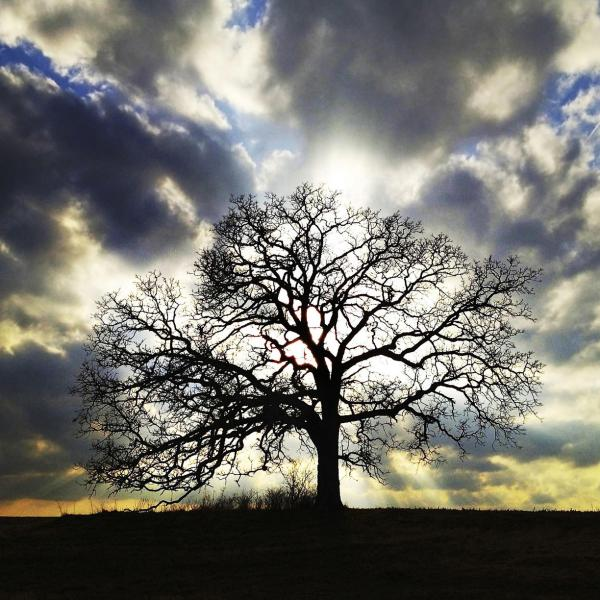 "March 14, 2012. ""An old Bur Oak is silhouetted by the setting sun in the second photo I ever took of it with my iPhone,"" says Hirsch. ""I eventually committed to photographing the tree every day for a year in a project I called <em>That Tree</em>."""