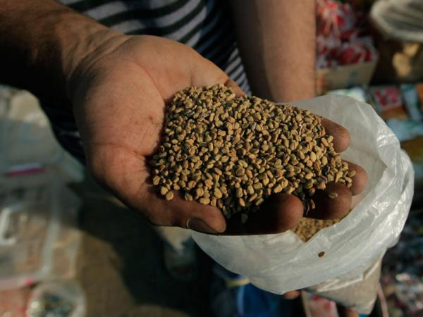 <p>An Egyptian spice dealer displays fenugreek seeds at his shop in Cairo. An outbreak of <em>E. coli</em> was traced back to fenugreek seeds.</p>
