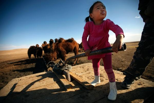 Amin-Erdene Galkhuu pumps well water to her family's Bactrian camels in Mongolia's South Gobi region. Herders and mining firms both need water in this arid area.