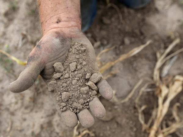 A farmer sifts through the drought-stricken topsoil of his Logan, Kansas, land in August 2012.