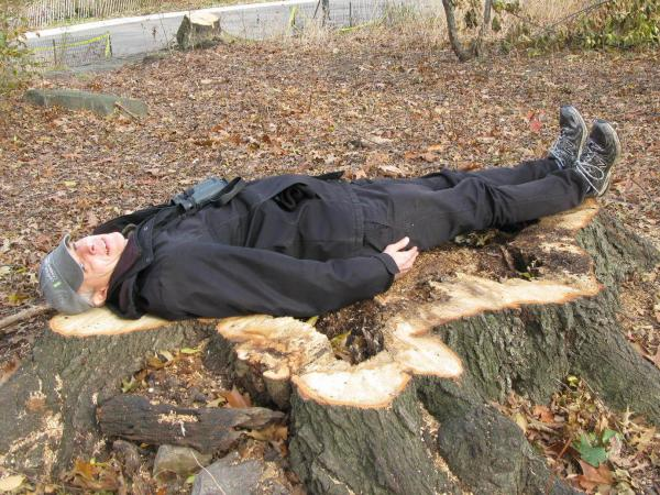 Chaya, who is 6 feet tall, lies down on a massive stump of a Northern Red Oak, the center rotted out.