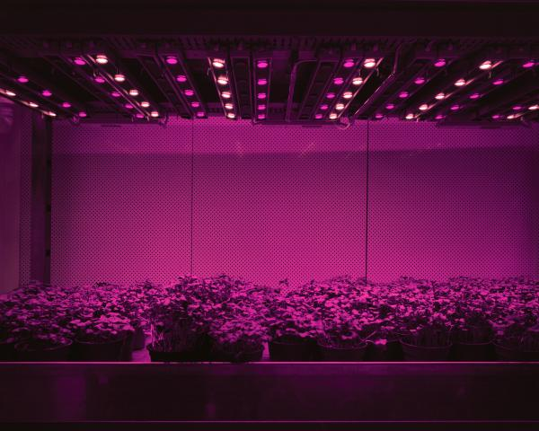 <em>Cress, 2011:</em> Cress, tomatoes, cucumbers, or lettuce are grown in closed systems just with LED lights. There is no sunlight and no direct exchange of air with the outside. Day and night, summer and winter stop existing. Humans are able to determine the shape, taste and color of plants and fruits. They can be grown anywhere from the desert to inside of restaurants and supermarkets.
