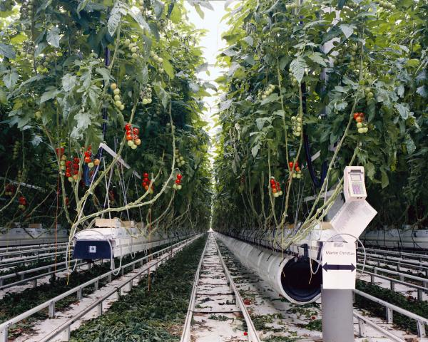 <em>Tomatoes II, 2011:</em> In order to consume locally grown tomatoes in ... the U.K. or Germany, the tomatoes need to be produced in heated greenhouses. ... To produce in more sustainable ways and to keep the cost of energy low, the greenhouse above is heated by the waste heat from a nearby nuclear power station.