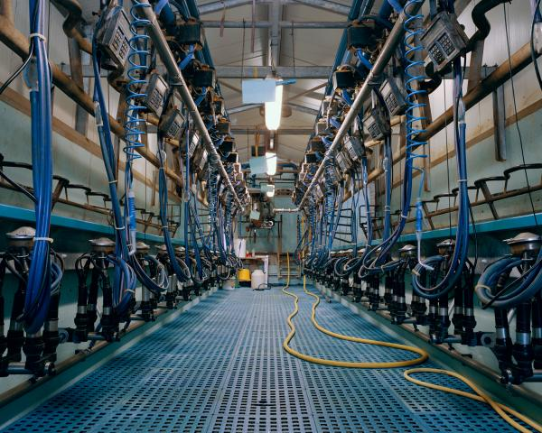 <em>Milking Parlor, 2012:</em> Two people are needed to milk twice a day, 300 cows.