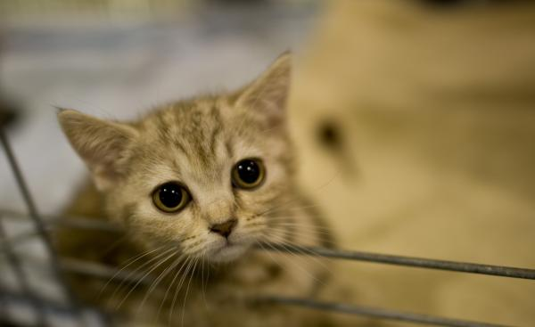 Emma looks out from her cage at a pet trade show in Dresden, Germany.