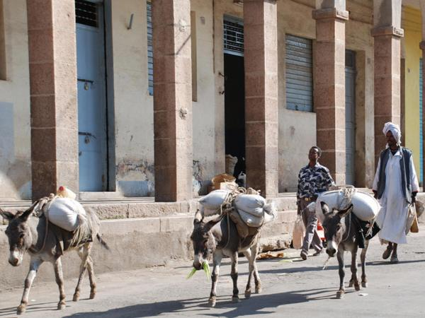 Eritrean farmers herd a team of donkeys into the capital Asmara for the main weekly Saturday market in 2007.