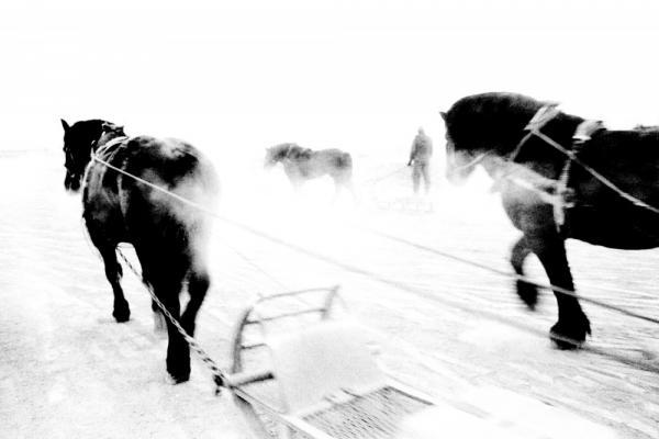 Hajime Kimura documents Japan's racehorse industry.