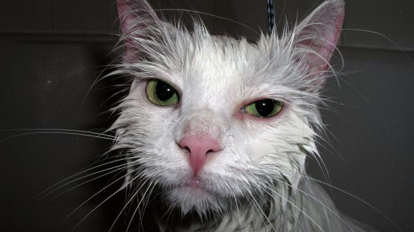 This is a cat who appears in a perfectly lovely piece of stock photography but who, as far as we know, lacks a movie deal. Get on it, Wet Cat!