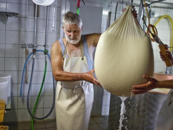 Swiss cheese-maker Ernst Waser lets the whey drain off from the skimmed cheese curd through the cheesecloth.