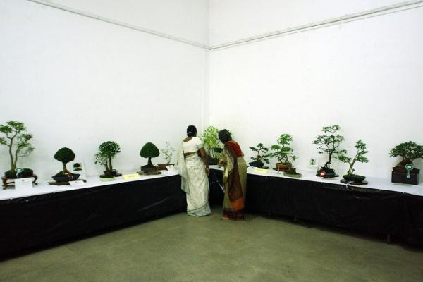 Don't forget the little trees. The Japanese art of bonsai, using miniature trees grown in containers, has equivalents in other cultures. Here, two women look at bonsai trees in Sri Lanka.