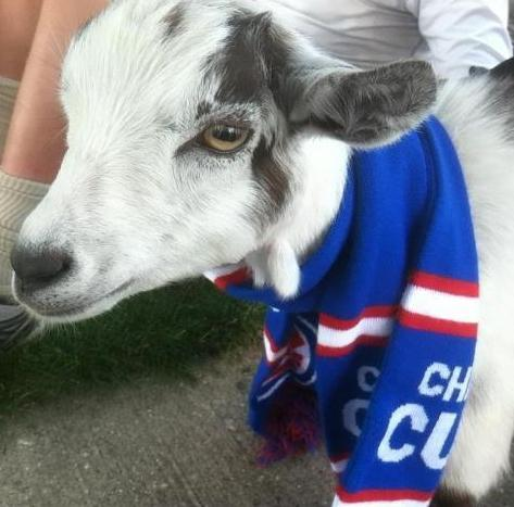 Wrigley, the goat that is.