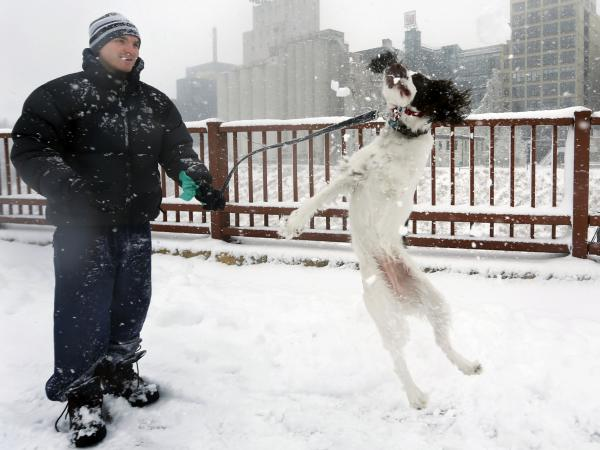 This dog likes snow: In Minneapolis on Sunday, Adam Womersley and his English Springer Spaniel, Stella, had some fun out in the winter weather.