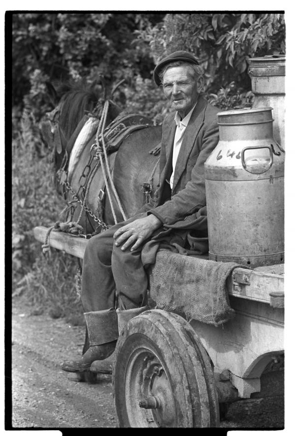 Old farmer bringing home milk cans on horse and cart, 1970s.