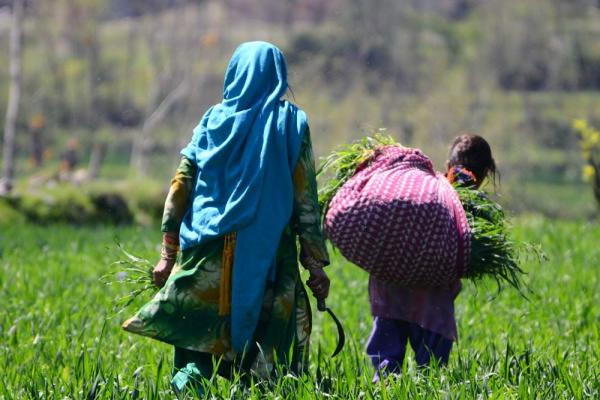A mother and daughter work in the fields in a village in the Swat Valley.