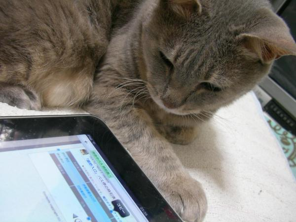 This blog may contain cats.