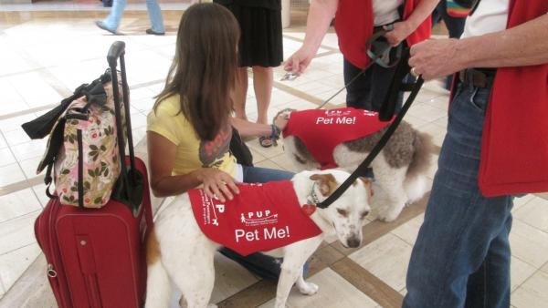 Therapy dogs Barney (rear) and Hazel are on the job comforting weary travelers at LAX.