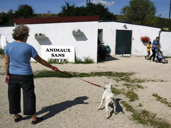 A volunteer takes an abandoned dog for a walk at the Animals Without Home shelter in 2010.