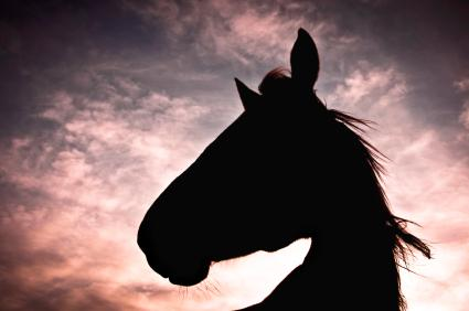 """The best thing that ever happened to horses was that they ceased to be the automobiles and trucks of their day,"" says author Jane Smiley. ""The automobile was invented and horses became pets, companion animals, leisure animals and so in general they became better treated."