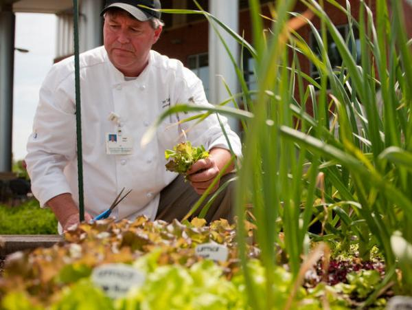 Executive chef Tony DeWalt picks some lettuce from the Fauquier Hospital's culinary healing garden.