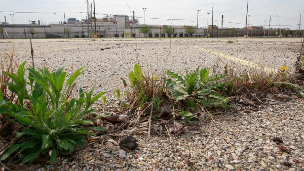 Weeds were already growing in the parking lot outside the GM assembly plant in Janesville, Wis., on May 4, 2009.