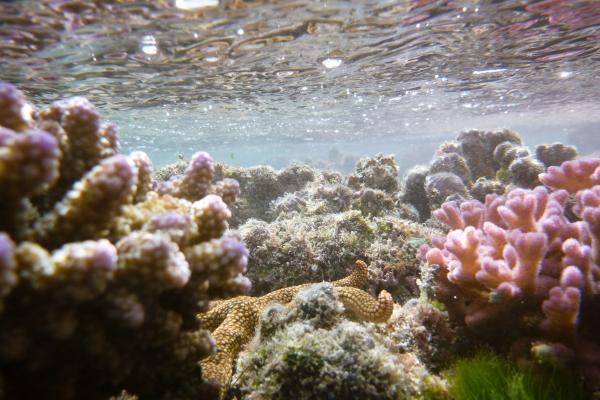 The world's oceans are 30 percent more acidic than they were before the industrial revolution because carbon dioxide from cars and power plants dissolves in ocean water and turns into carbonic acid. That threatens the health of the world's coral reefs.