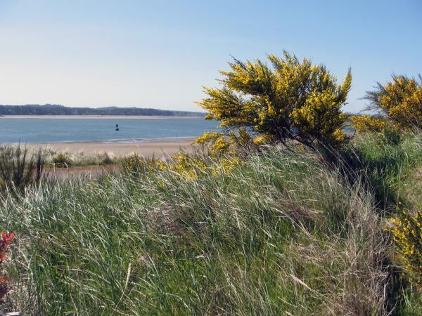The site of the proposed Jordan Cove Energy liquefied natural gas export facility near Coos Bay, Ore. Proponents say it would boost the local economy, but others worry it will affect recreation.