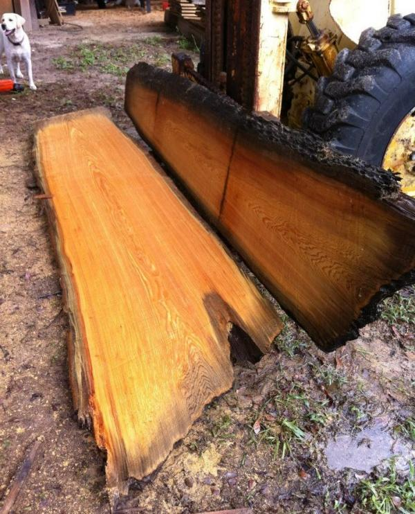 A cypress log, dredged from a river in South Carolina, being milled for furniture and other uses. The rough bottom edge indicates that the tree was originally felled by ax.