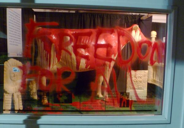 "This photo provided by Iowans for Animal Liberation shows the 2013 butter cow at the Iowa State Fair in Des Moines, Iowa. Authorities confirmed Monday that people had gained access to the display, poured red paint over the butter sculpture and scrawled, ""Freedom for all,"" on a display window."