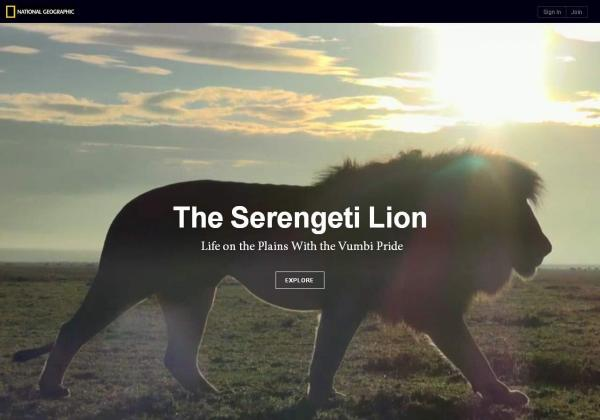 "Check out the <a href=""http://ngm.nationalgeographic.com/serengeti-lion/index.html#.Ug5EVdKmhAI"">Serengeti Lions interactive</a>"