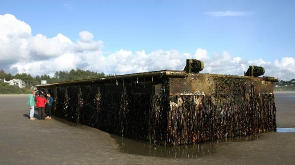 A nearly 70-foot dock that was torn loose from a fishing port in northern Japan by last year's tsunami washed ashore on Agate Beach in Oregon. Marine scientists have found potentially invasive species among the 100 tons of marine life that traveled aboard the dock.