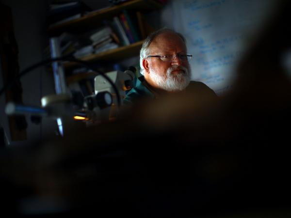 University of Arizona professor Tom Swetnam examines tree samples at the Laboratory of Tree-Ring Research in Tucson, Ariz. Swetnam says forests are burning hotter because they are overgrown.