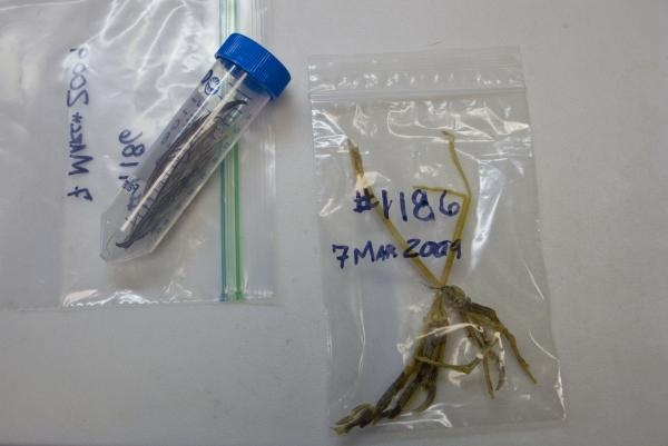 These partially digested specimens were cleaned, dried and labeled by the National Park Service in Florida and mailed to Dove's lab. The larger bag contains a python's ID number and is filled with smaller bags labeling each specimen.