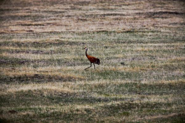 The valley contains the Centennial Sandhills Preserve, home to the sandhill crane.