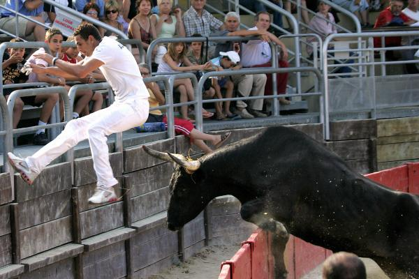 French <em>raseteur</em> Sabri Allouani flees from a bull during a bullfight in Vendargues, southeastern France, in 2006.