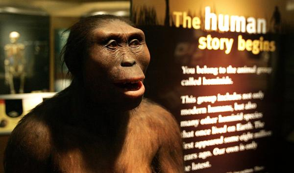"Human evolution is an unfolding process with chapters yet to be written; no one really knows where we're going. But we can look back to earlier chapters, with ancestors like <em>Australpithecus afarensis</em>, including the individual we call ""Lucy"" (seen above), for an understanding of how evolution works and what has happened to us over time."