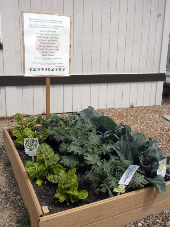 Gardening for health in Petaluma, Calif.
