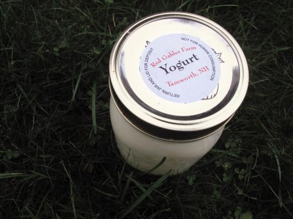 "<p>""Not for human consumption?"" Sources tell us this raw milk yogurt was delicious.</p>"