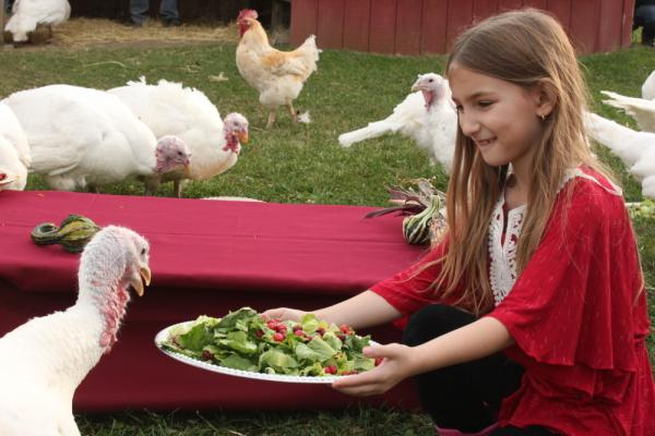 Isabella Colbdorf feeds salad to a turkey at this year's Feeding of the Turkeys ceremony in Watkins Glen, in upstate New York, on Nov. 20, 2011.