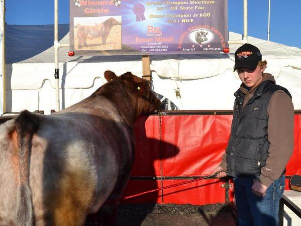 Reece Aglin drove 700 miles from Circle, Mont., to show his purebred shorthorn.