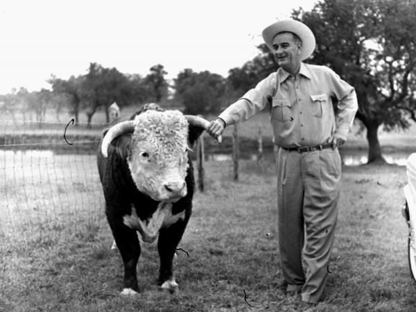 Lyndon Johnson looks over his prize Hereford bull on his ranch in Texas in 1960.