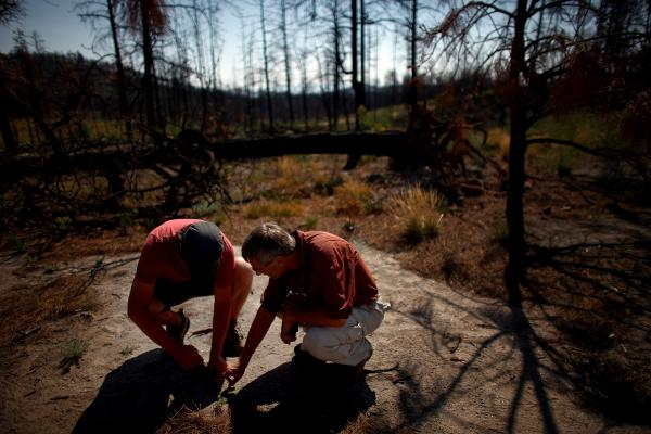 Collin Haffey, a biotechnician with Bandelier National Monument (left), and Allen examine a tiny Ponderosa pine tree sprouting up in the burn zone in the Dome Wilderness. Indigenous species of trees have failed to return to the area since the Las Conchas fire.