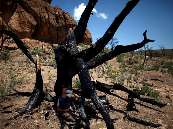 Jorge Castro, a visiting professor of Ecology from Spain, sips water in the shade of a burnt tree in New Mexico's Bandelier Wilderness area. Last year's Las Conchas fire devastated the area burning over 150,000 acres of forest.